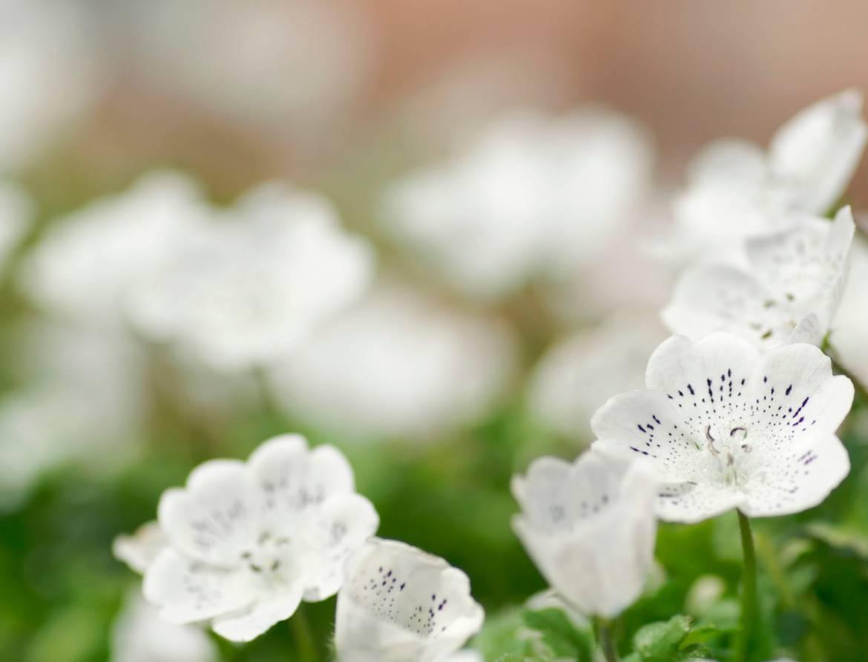 epsom-pozadie-kvety.jpg